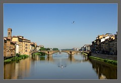 Morning Calm from the Ponte Vecchio / Matin calme depuis le Ponte Vecchio (Napafloma-Photographe) Tags: italy vacances florence holidays italia tuscany firenze arno toscane reflets oiseau italie vacanza mouette fleuve aviron 2013 riviere