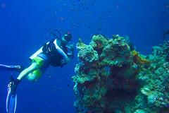 DSC01347.jpg (b34chd00d) Tags: underwater redsea egypt sharmelsheikh scuba diving