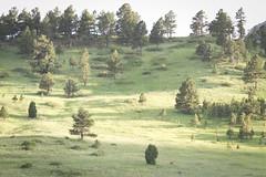 hillside (Nessie Photography) Tags: trees sunlight foothills mountains green forest colorado boulder hillside flatirons