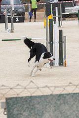 Agility Torrevieja (Fastius) Tags: dog canon jump ciudad agility perros salto octubre prueba 300 doc tunel tamron 70 vc gos rampa torrevieja 70300 balancin trofeo trainning 2013 torrevella 700d