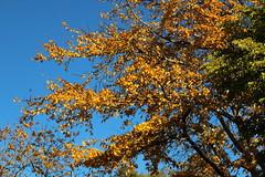 Hösten i Botaniska Trädgården