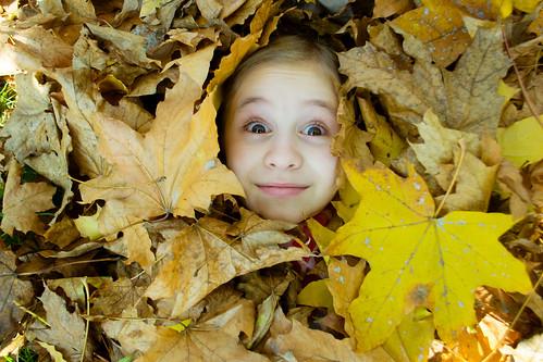 Autumn Surprise