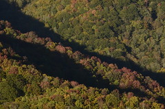 Autumn in the Great Smoky Mountains (Christopher Wallace) Tags: park autumn trees light sunset mountain mountains color colour tree green fall colors beautiful leaves yellow season golden nationalpark amazing nikon pretty colours afternoon seasons view tn tennessee gorgeous altitude south great southern national hour change late rays smoky overlook 18200 vr goldenhour greatsmokymountains lateafternoon astonishing greatsmokymountainsnationalpark easterntennessee 18200mm 18200mmvr d7000