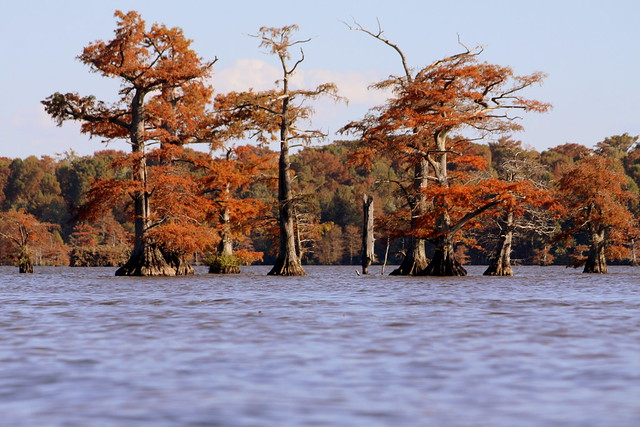 Reelfoot Lake in Autumn