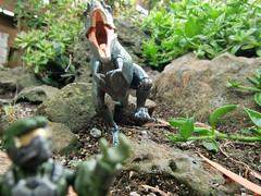 pachyrhinosaurus vs gorgosaurus toy  Gorgosaurus Vs Pachyrhin...