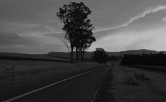 October Deasys Road (Palmou) Tags: road blackwhite vineyard spring huntervalley