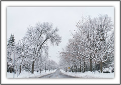Winters Storm (bigbrowneyez) Tags: road trees winter canada storm cold nature weather blackwhite snowy branches snowst