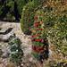Trees_of_Loop_360_2013_281