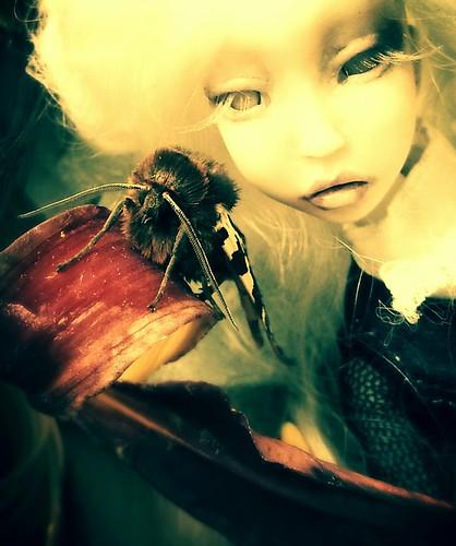 "LD moth queen, Lightpainted Doll, porcelain bjd, ooak • <a style=""font-size:0.8em;"" href=""http://www.flickr.com/photos/11364959@N00/11410501605/"" target=""_blank"">View on Flickr</a>"