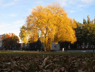 Autumn Leaves, Exodus