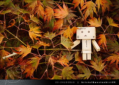 danbo_005 (iskandarbaik) Tags: park uk autumn trees england tree cute home forest toy photography leaf woods bokeh outdoor manga cardboard autumnal yotsuba danbo danbooru revoltech danboard cardbo danboru vision:sky=0601
