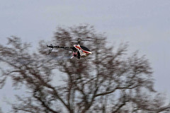 RDRC in the New Year - Raptor Pass (John. Romero) Tags: radio plane canon airplane photography fly flying photo airport durham control aircraft aviation air flight raleigh hobby raptor planes remote tamron runway rc flyin rdrc