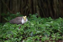 Hi there (Henry Sudarman) Tags: bird animal indonesia samsung jakarta nx 50200