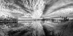 Orlando Wetlands Park (Ed Rosack) Tags: sky blackandwhite bw panorama usa cloud reflection tree water grass landscape ir orlando florida palm infrared centralflorida swampmarsh orlandowetlandspark