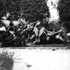 Doves (designerus) Tags: street bw motion birds fuji expression mf blacknwhite doves ekat fomapan gx680