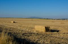 Balas de paja (cives-expat) Tags: españa naturaleza nature landscape spain paisaje fields andalusia campos jerezdelafrontera