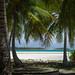 Atoll of Palms