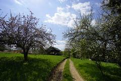 _DSC6461 (Nonesmanneslond) Tags: slovenia slovene kitnivhr