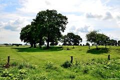 Ostfriesland / Landschaft bei Etzel (2) (berndwhv) Tags: landscape landschap deutschland norddeutschland niedersachsen ostfriesland landkreiswittmund etzel weideland baumgruppe