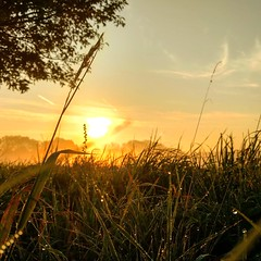 Sunraise (micha81sch) Tags: wiese sunraise sunrise sunny sun beautyfull photo photography germany deutschland