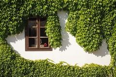 green window (by Andy) Tags: 2016 pm2 weinviertel wein fenster window frame green
