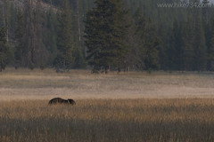 "American Bison • <a style=""font-size:0.8em;"" href=""http://www.flickr.com/photos/63501323@N07/30159985360/"" target=""_blank"">View on Flickr</a>"