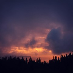 Lavender Dream Burning. #vancouver #sunset #tree #georgiastraight #warhol #lavender
