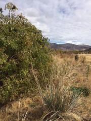IMG_1425 (Oregon Natural Desert Association) Tags: denny jones ranch weed mat removal 2016 stewardship trips