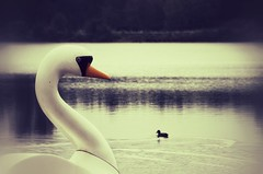 quite emotional (***toile filante***) Tags: bird birds vogel vgel swan schwan ente duck emotional emotions feelings soul poetic poetisch big tiny klein gros creative kreativ beautiful schnheit beauty see lake soulful