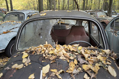 VW Graveyard (Jonnie Lynn Lace) Tags: abandoned abandonedcars abandonedamerica abandonedvw vwgraveyard decay decayed decaying chasinglight derelict peelingpaint paintchips cargraveyard cars fall leaves fallleaves fallcolors decayingindustry vw volkswagen nature country trees tree yellow orange car old