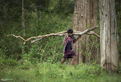 in the forest (THASLEEM MK) Tags: forest jungle man work scary life green nature woods tree common india kerala tamilnadu masinagudi