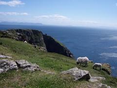 Slieve League, Republic of Ireland (catherineloftis) Tags: beach ireland republicofireland cliff cliffs greenery landscape sand
