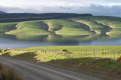 The hills run down to the lake. (Ian@NZFlickr) Tags: lake mahinerangi morning still reflections green fields gullies road fence grass otago nz