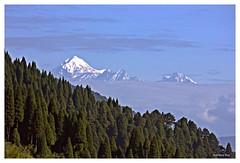 Mount Pandim,Chitrey (Anindya_Doordarshan) Tags: chitrey darjeeling nepal himalaya kangchenjunga kanchanjungha pandim mountain nature snow forest pine canon kanchendzonga kabru sky morning singalila trek