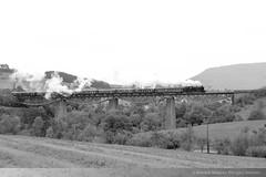 BB 262 in Ftzen, Talbrcke DFD_8708 (foto_DM) Tags: blumberg eisenbahn dampflok zug dampfzug sauschwnzlebahn wutachtalbahn zollhaus ftzen weizen br262 frankfurt knigstein epfenhofen schwarzwald