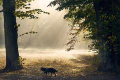 Golden October (Karl_Reif) Tags: sonyilce7r sony a7r mirrorless sonyalpha zeiss35mmf28 sonnartfe2835 visitor candid people schlosspark castle weitmar bochum schlossweitmar schlossparkweitmar golden october light autumn dog hund