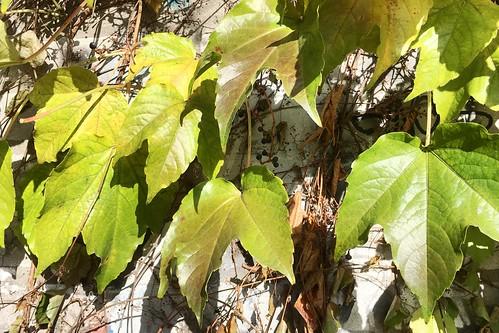 Liście / Leaves