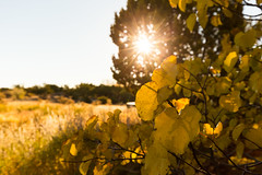 Sunlight Santa Fe ([ raymond ]) Tags: americansouthwest light newmexico outdoors southwest sun sunlight sunny sunrise tree img9892 nature leaves foliage autumn fall weather
