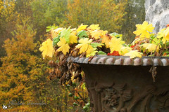 Bloempot bij La Margalette in My, Belgi (Nicolette Vermeulen) Tags: autumn autumncolors herfst herfstbladeren herfstkleuren herfstsfeer seizoen bladeren bloempot my belgi belgium tuin garden roest la margalette