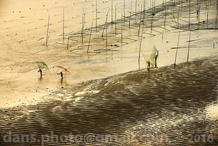 Xiapu's mudflats at sunrise 霞浦滩涂日出