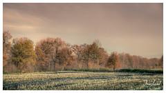 Abgeerntet (Onascht) Tags: landscape landschaft sigma nature serienaufnahme natur varel hdr tree aufnahme baum bockhorn friesland onascht photography herbst soft feld digitalart photoart nikond610 150500mm