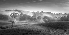 Campagne Matinale.. (Explore 24/11/16) (f.ray35) Tags: blackandwhite noiretblanc contraste brume messac tree campagne ombre light bretagne breizh landsape ille et vilaine 35 canon