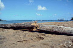 Hawaii 2016 (cade.rina) Tags: hawaii oahu beach hanalei george clooney descandants