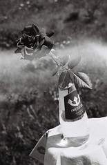 000007 (Shota Kotake) Tags: nikon nikonu nikonn65 n65 filmcamera kodak kodaktx400 tx400 blackandwhite 35mm 35mmfilm stilllife flower rose neputunas