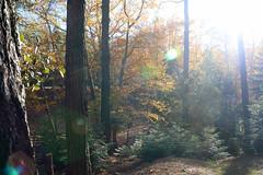 Troodos Geopark (39) (Polis Poliviou) Tags: polispoliviou polis poliviou   cyprus cyprustheallyearroundisland cyprusinyourheart yearroundisland zypern republicofcyprus  cipro  chypre   chipir chipre  kipras ciprus cypr  cypern kypr  sayprus kypros polispoliviou2016 troodosgeopark troodos mediterranean nicosia valley life nature forest historical park trekking hiking winter walking pine pines prodromos limassol paphos fall autumn geopark kakopetria