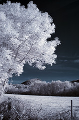 Wild (Lolo_) Tags: ir tree volcano auvergne france infrarouge infrared parc naturel rgional volcans menet puy champ arbre field augoules autumn automne