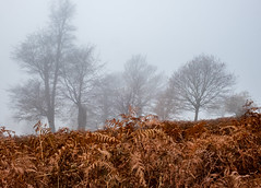A murky misty morning (colin.smith18) Tags: walking nature trees weather mist fog