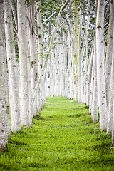 Trees Pathway Landscape (irecyclart) Tags: grass inspiration landscape tree