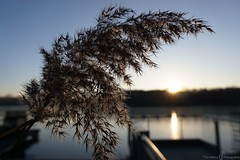 Krickenbecker Seen (photographie by jacobiclever) Tags: krickenbecker seen nette nettetal see lake wasser sonne sonnenschein sonnenuntergang landachaft landscape