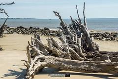Driftwood Beach (The Suss-Man (Mike)) Tags: atlanticocean beach driftwoodbeach georgia glynncounty jekyllisland ocean sand sonyslta77 sussmanimaging thesussman trees water unitedstates